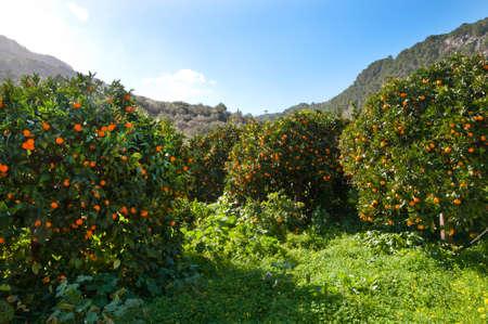 オレンジ色の谷、マヨルカ島、バレアレス諸島、スペイン 写真素材