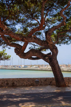 Boot jachthaven, fietsroute en een grote boom. Mallorca, Balearen, Spanje.