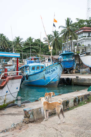tangalle: TANGALLE, SOUTHERN PROVINCE, SRI LANKA, ASIA - DECEMBER 20, 2014: Colorful wood fishing boats moored on December 20, 2014 in Tangalle port, Southern Province, Sri Lanka.