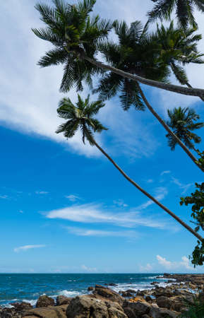 southern indian: Tropical rocky beach with coconut palm trees, sandy beach and ocean. Tangalle, Southern Province, Sri Lanka, Asia.