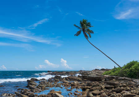 rocky point: Tropical rocky beach with coconut palm tree. Rocky Point, Tangalle, Southern Province, Sri Lanka, Asia. Stock Photo