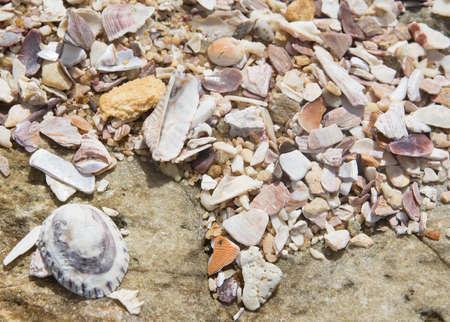 southern sri lanka: Seashells background, Southern Province, Sri Lanka, Asia.