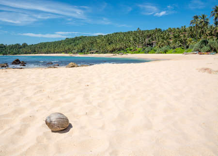 tangalle: Beach with coconut. Paradise beach with white sand and coconut. Aman beach, Tangalle, Southern Province, Sri Lanka, Asia.