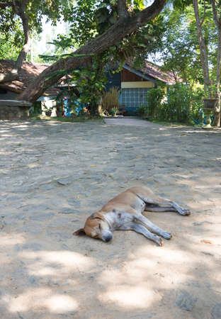 rocky point: Sleeping dog. Dog sleeping on the ground outside Rocky Point Beach Bungalows, Tangalle, Southern Province, Sri Lanka, Asia. Editorial