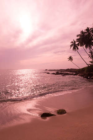 Tropical pink landscape, beach with coconut palms and sun reflecting in water by the Indian Ocean, Sri Lanka, Asia.