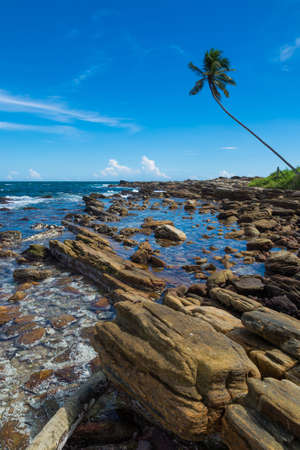 landforms: Tropical rocky beach with coconut palm trees and lined metamorphic landforms. Southern Province, Sri Lanka, Asia. Stock Photo