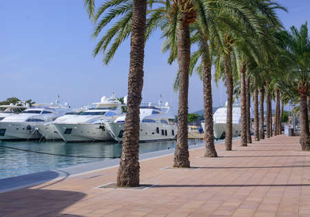 PUERTO PORTALS, MAJORCA, SPAIN - OCTOBER 27, 2013: Luxury yachts and palm trees on October 27, 2013 in Puerto Portals, Majorca, Spain. Editorial