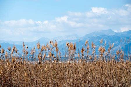 Albufera natural reserve Tramuntana mountains and reeds. Mallorca, Balearic islands, Spain.
