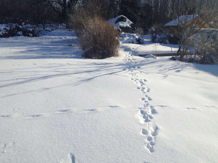 Snow meadow landscape with animal or human tracks on a sunny day, Stockholm, Sweden. photo