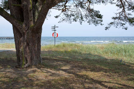 life saving: Tree and life saving buoy on the beach in Ahus, Sweden.