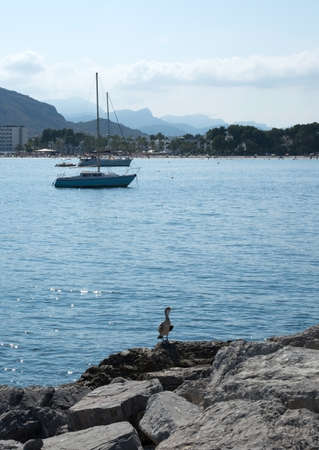 large bird: PUERTO ALCUDIA, MALLORCA, BALEARIC ISLANDS, SPAIN - JULY 15, 2014: Sailboat in the bay and large bird on a rock on July 15, 2014 in Mallorca, Balearic islands, Spain.