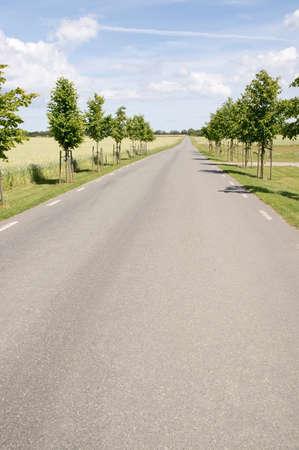 empedrado: Camino pavimentado a trav�s del paisaje rural con campos de ma�z en el sur de Suecia el verano.