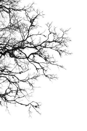 margen: Margen de árbol blanco y negro con las ramitas y el cielo blanco.