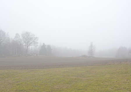 Foggy rural landscape with field and tree, Sormland, Sweden.