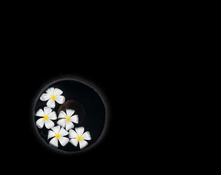 southern sri lanka: White beautiful Frangipani flowers floating in water urn isolated on black.