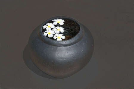 southern sri lanka: White beautiful Frangipani flowers floating in water urn on dark brown abstract backgrund in Sri Lanka Asia. Stock Photo