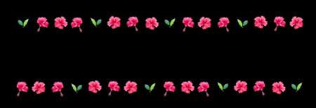 margen: Carmine hibisco rojo margen de la flor con las flores y las hojas aisladas sobre fondo negro.