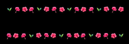 margin: Carmine red hibiscus flower margin with flowers and leaves isolated on black background. Stock Photo