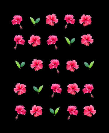 carmine: Carmine red hibiscus flower wall arranged in rows isolated on black background.