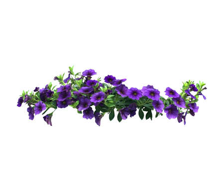 Purple petunia flowers in a string isolated on white. Stockfoto