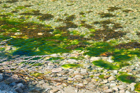 green river: Green river seagrass in river in Bindal in Nordland, Norway on a sunny summer day. Stock Photo