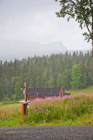 fireweed: Swedish scenery. Scenic landscape with pink Fireweed flowers near Ostersund in Northern Sweden on an overcast day.