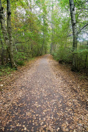 dirt path: Green forest dirt path with yellow leaves, Stockholm, Sweden in October. Stock Photo
