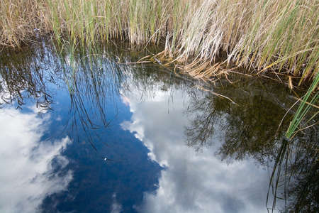 sky reflection: Blue sky reflection and reeds, Stockholm, Sweden in October. Stock Photo