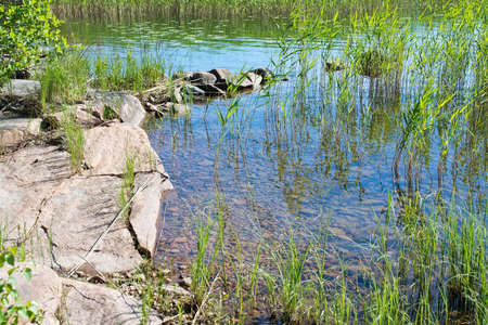 plant: Lake edge with red granite rocks and aquatic grass in a sunny summer day in Varmland, Sweden.