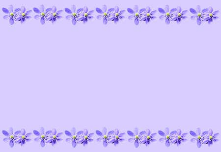 hepatica: Purple spring background frame with hepatica nobilis liverwort flowers