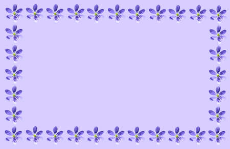 liverwort: Purple spring background frame with hepatica nobilis liverwort flowers