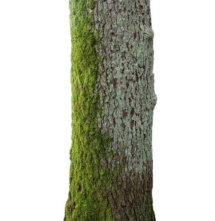 Boom met groene mos trunk geïsoleerd op wit.