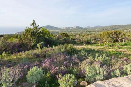 vedra: Ibiza heather landscape in December in Ibiza, Balearic islands, Spain
