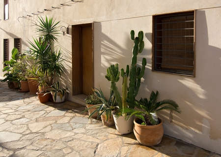 Mediterranean plants outdoors in terracotta pots on a sunny day in December in Palma de Mallorca, Balearic islands, Spain Stock Photo