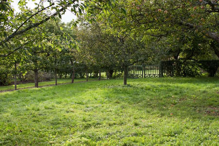feuille arbre: Green open space garden with metal gate, grass lawn and apple trees in Sweden in October.