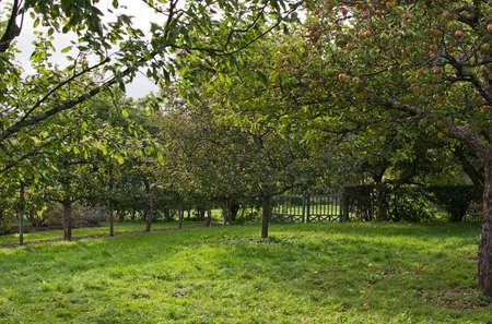 hojas de arbol: Verde jard�n espacio abierto con puerta de metal, c�sped y �rboles de manzana en Suecia en octubre.