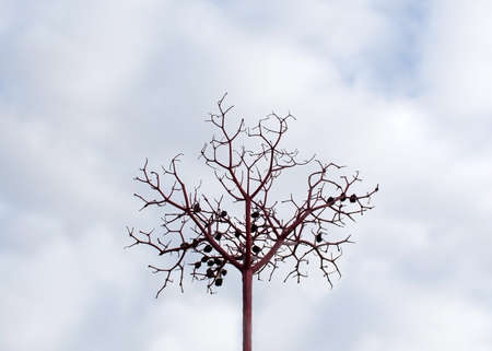 wilted: Abstract berry tree. Dry wilted decorative berry or herb twig, Sweden with cloudy October skies Stock Photo