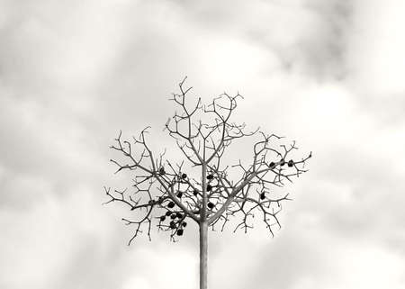 wilted: Abstract berry tree. Dry wilted decorative berry or herb twig, Sweden with cloudy October skies in monochrome sepia. Stock Photo