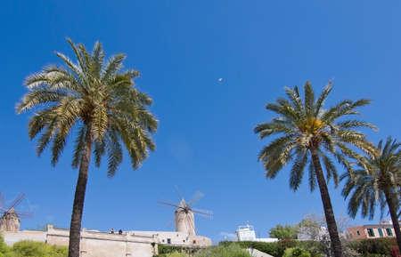 es: PALMA DE MALLORCA, BALEARIC ISLANDS, SPAIN - APRIL 10, 2016: Windmill and palm trees at Es Jonquet in Palma de Mallorca, Balearic islands, Spain on April 10, 2016.