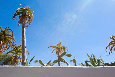 White roughcast wall with green subtropical plants against blue sky, Mallorca, Spain in September. Stock Photo