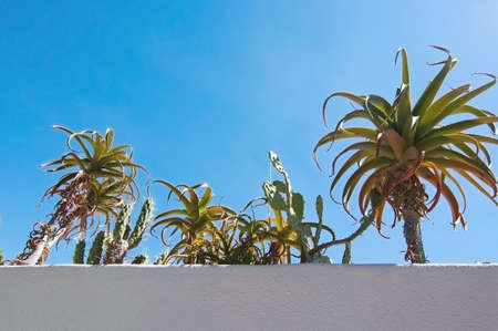 roughcast: White roughcast wall with green subtropical plants against blue sky, Mallorca, Spain in September. Stock Photo