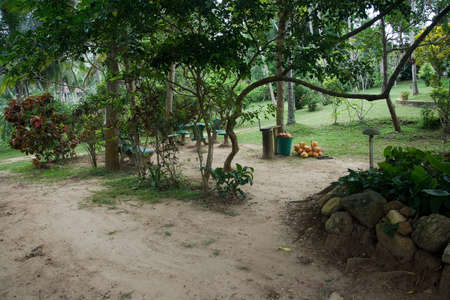 rocky point: TANGALLE, SRI LANKA, ASIA - DECEMBER 17, 2014: Green garden and a pile of fresh king coconuts and chairs at Rocky Point on December 17, 2014 in Tangalle, Sri Lanka, Asia. Editorial