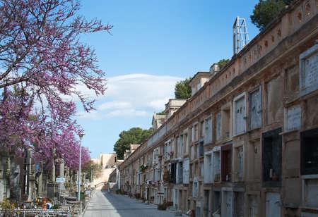 PALMA DE MALLORCA, SPAIN - MARCH 23, 2017: Tanatori son Valenti Palma cemetery memorial plaques on wall and pink blossoming Judas tree, Cercis siliquastrum, on March 23, 2017 in Palma, Mallorca, Spain. Editorial