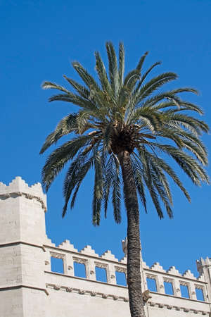 mallorca: Sa Llotja tower palm and blue sky on a sunny day in Palma, Mallorca, Spain.