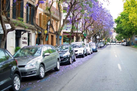 palma: PALMA DE MALLORCA, BALEARIC ISLANDS, SPAIN - MAY 30, 2017: Blossoming blue or purple jacaranda trees with parked cars in a street on May 30, 2017 in Palma de Mallorca, Balearic islands, Spain. Editorial