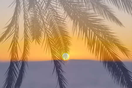 Colorful setting sun on blue or purple earth, water and yellow sky with superimposed palm leaves background 写真素材