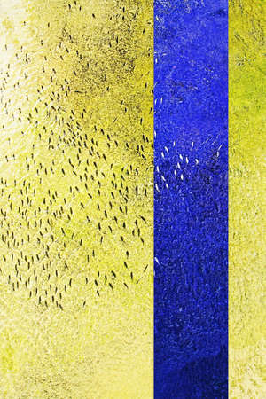 Fish swim in same direction in shallow abstract yellow water concrete canal abstract for following, group pressure, dependencies concepts. Blue complimentary vertical color line 写真素材