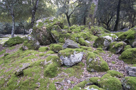 Landscape with round mossy limestone rocks in the Lluc area on a sunny winter day in Mallorca, Spain.