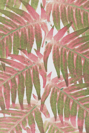 Green and red color sunlit fern leaves against light background