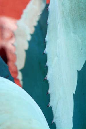 Abstrakte saftige Agave und Aloe Vera Pflanzen Makro in surrealistischem Farbschema Türkis, Orange, Blau